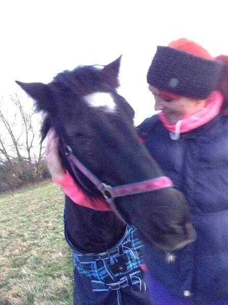 Equine Communicator and Reiki Healer